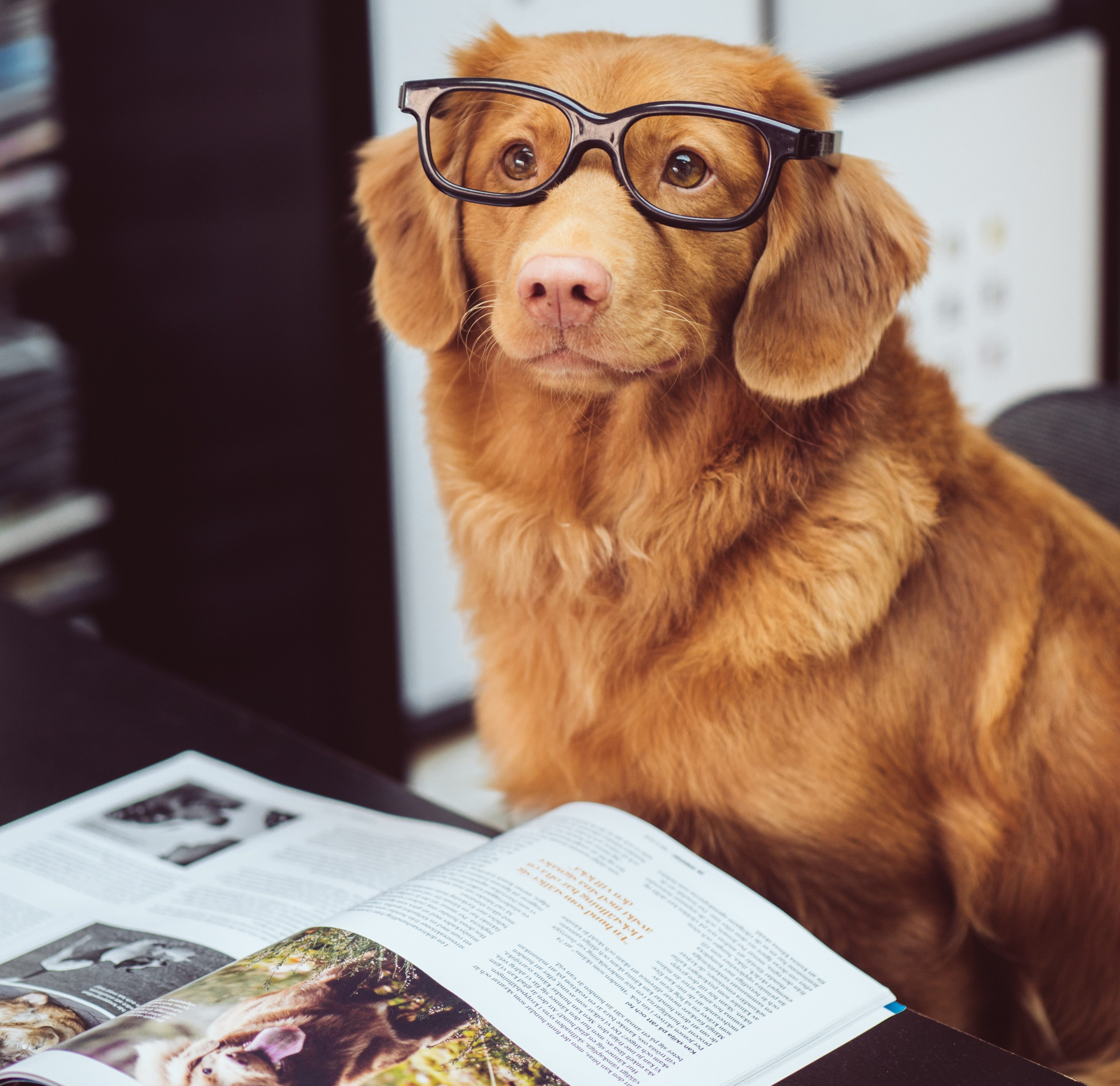 An ideal reader with a furry coat and tail